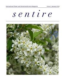 Sentire Essence Magazine