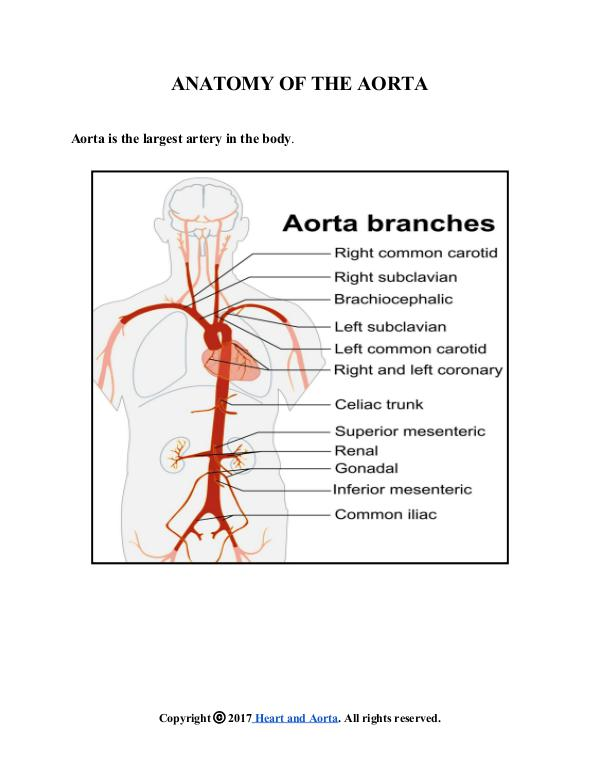 Heart And Aorta Anatomy Of The Aorta Joomag Newsstand
