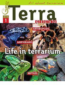 Terra Gecko Magazine : All about terrarium